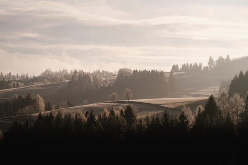 Бесплатное стоковое фото с вода, дерево, деревья, закат