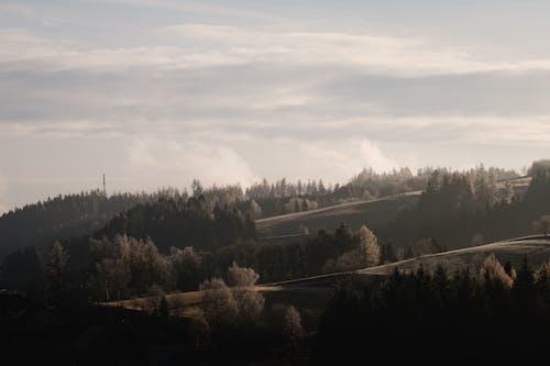 Бесплатное стоковое фото с вода, гора, дерево, деревья