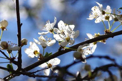 Immagine gratuita di bocciolo, fiore, fiori, flora