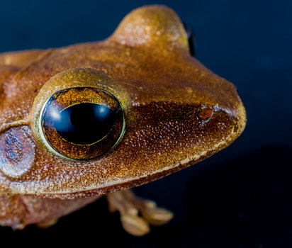 Macro Shot of Brown Frog