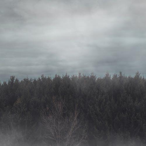 Foto profissional grátis de ao ar livre, árvore, atmosfera