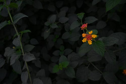 Free stock photo of beautiful flower, flower, yellow