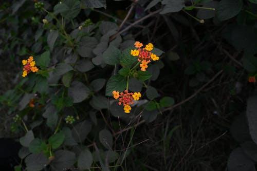 Free stock photo of beautiful, blooming flowers, yellow
