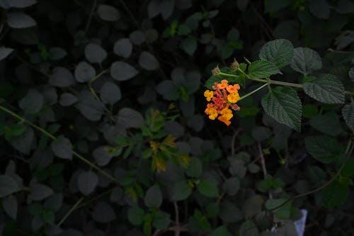 Free stock photo of beautiful flowers, yellow