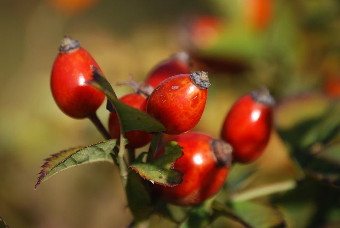 Red Oval Fruits in Macro Lens