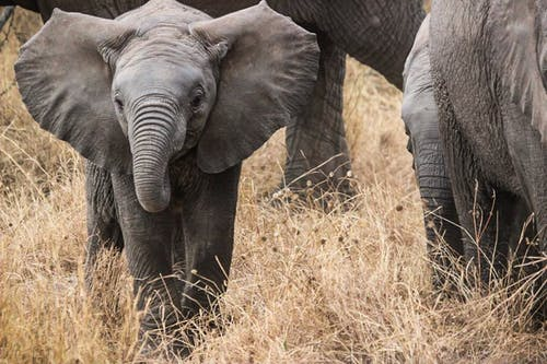 乾草, 塞倫蓋蒂, 野生動物, 非洲 的 免费素材照片