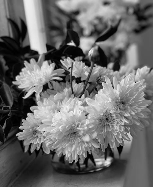 白色的花朵, 美麗的花朵, 花瓶里的花 的 免费素材图片