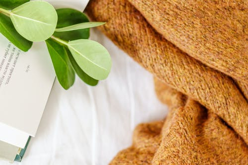 High angle of plant with delicate leaves on paper book near sweater on white blanket
