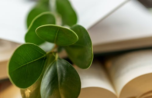 Fresh plant on various books at home