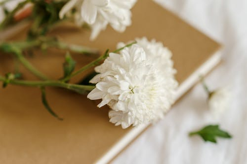 Fresh chrysanthemums with delicate petals on book