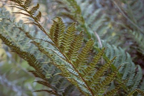 Close-Up Shot of a Fern Leaves