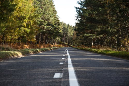 Empty straight road through coniferous forest