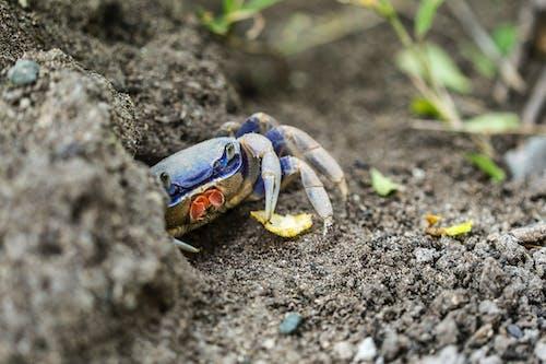 Kostenloses Stock Foto zu arachnology, arthropoden, außerorts