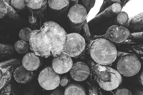 Stack of logs in rural area