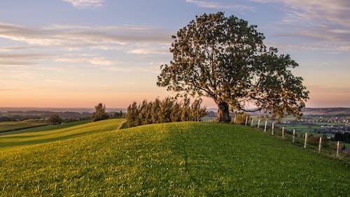 Scenic landscape of green tree on meadow