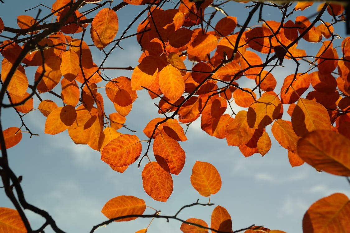 Oranje Bladeren Tijdens Daglicht