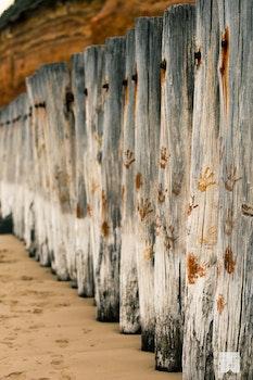 Free stock photo of wood, beach, australia, breakwater
