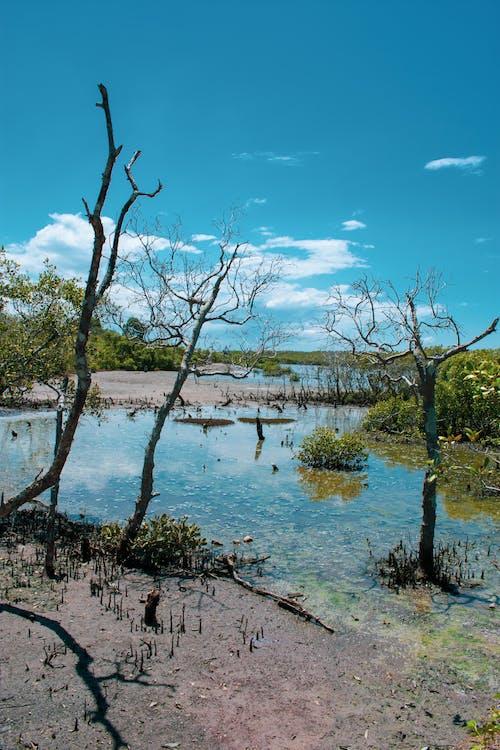คลังภาพถ่ายฟรี ของ wynnum north esplanade, wynnum qld, กลางแจ้ง, การท่องเที่ยว
