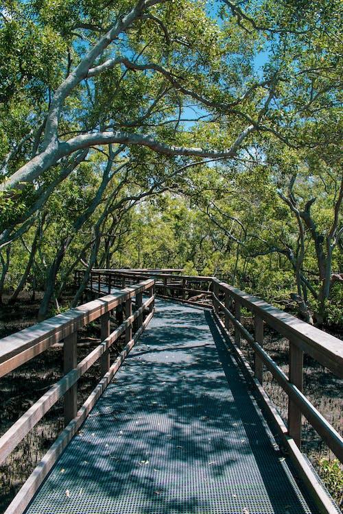 Immagine gratuita di acqua, albero, aussie, australia