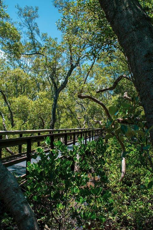 คลังภาพถ่ายฟรี ของ wynnum north esplanade, wynnum qld, ดอกไม้, ทางเดินริมทะเลป่าชายเลน wynnum