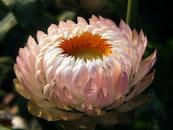 plant, flower, macro