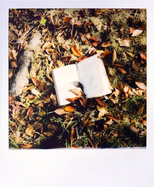 Gratis arkivbilde med avfall, avhengighet, blad