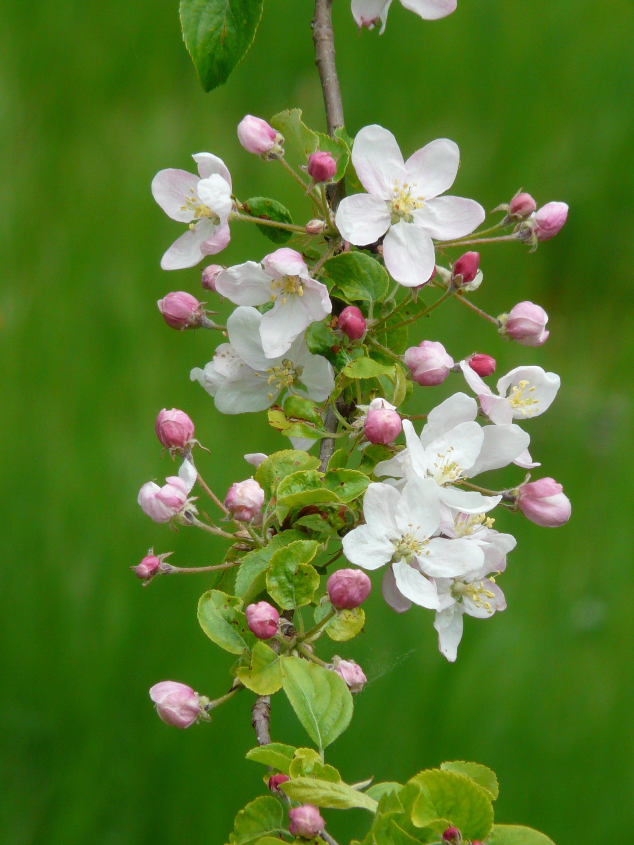 White 5 Petal Flower