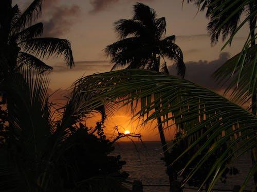 Бесплатное стоковое фото с берег моря, вода, восход, деревья