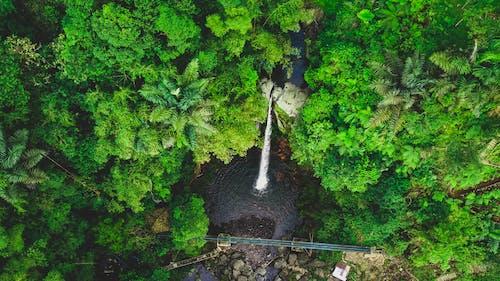 Fotos de stock gratuitas de abstracto, agua, amante de la naturaleza, árbol