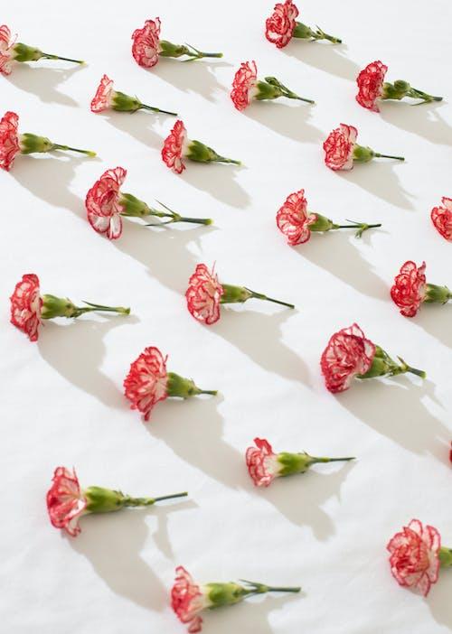 Blumen Auf Weißer Oberfläche Zusammengesetzt