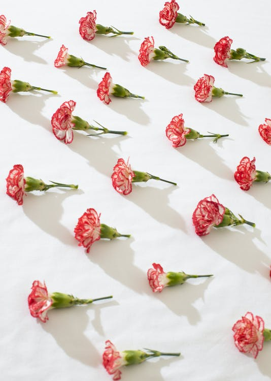 Flowers composed on white surface