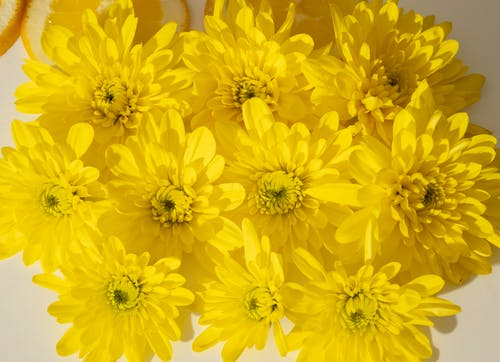 From above closeup of bright yellow chrysanthemum flowers composed in lush bouquet in daylight