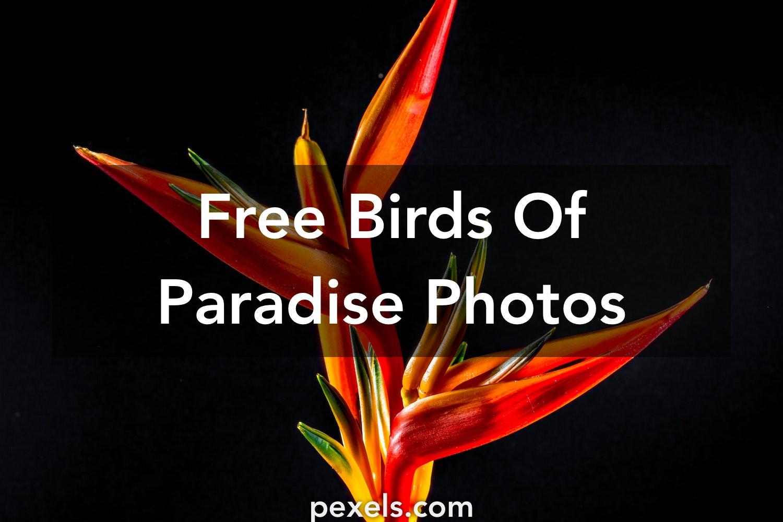 1000+ Engaging Birds Of Paradise Photos · Pexels · Free Stock Photos