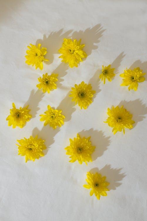 白い背景の上の黄色い花の構成
