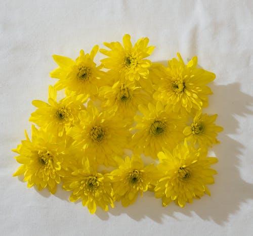 Gratis lagerfoto af aroma, aromatisk, arrangement