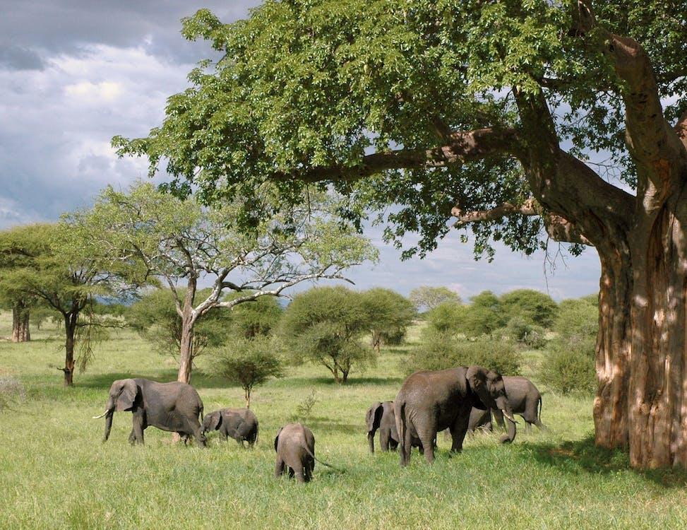 การถ่ายภาพสัตว์, ช้าง, ซาฟารี