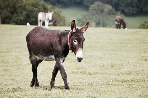 Donkey on Grass Field