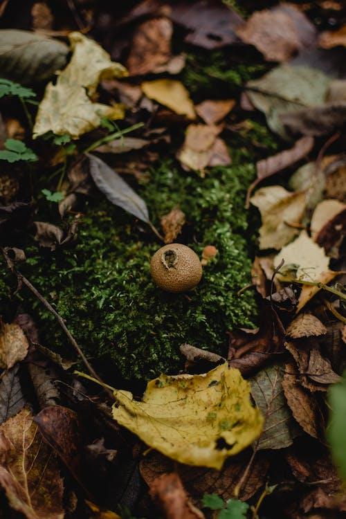 Photos gratuites de aliments, arbre, automnal, automne