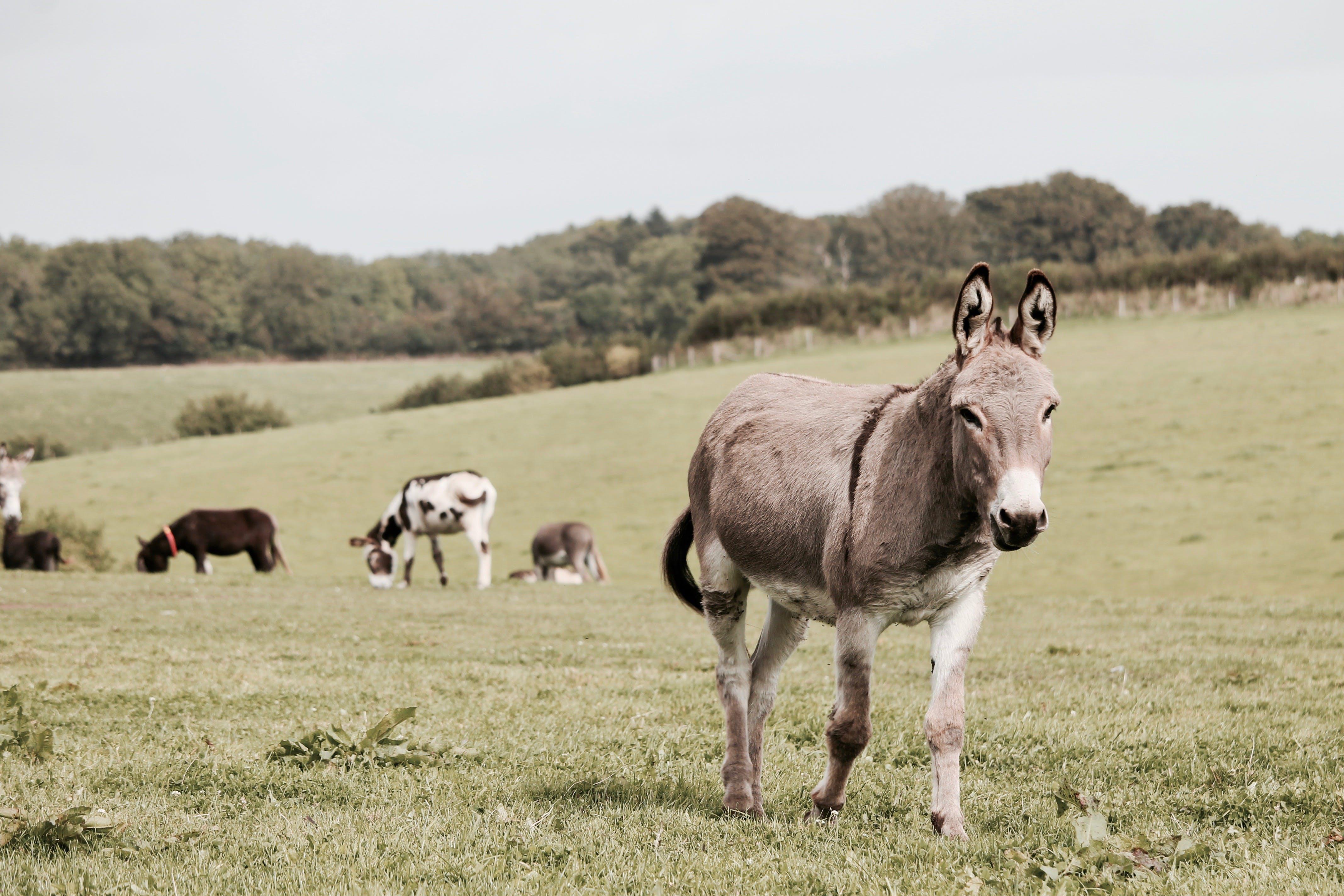 Foto d'estoc gratuïta de animal, animals, arbres, bestiar