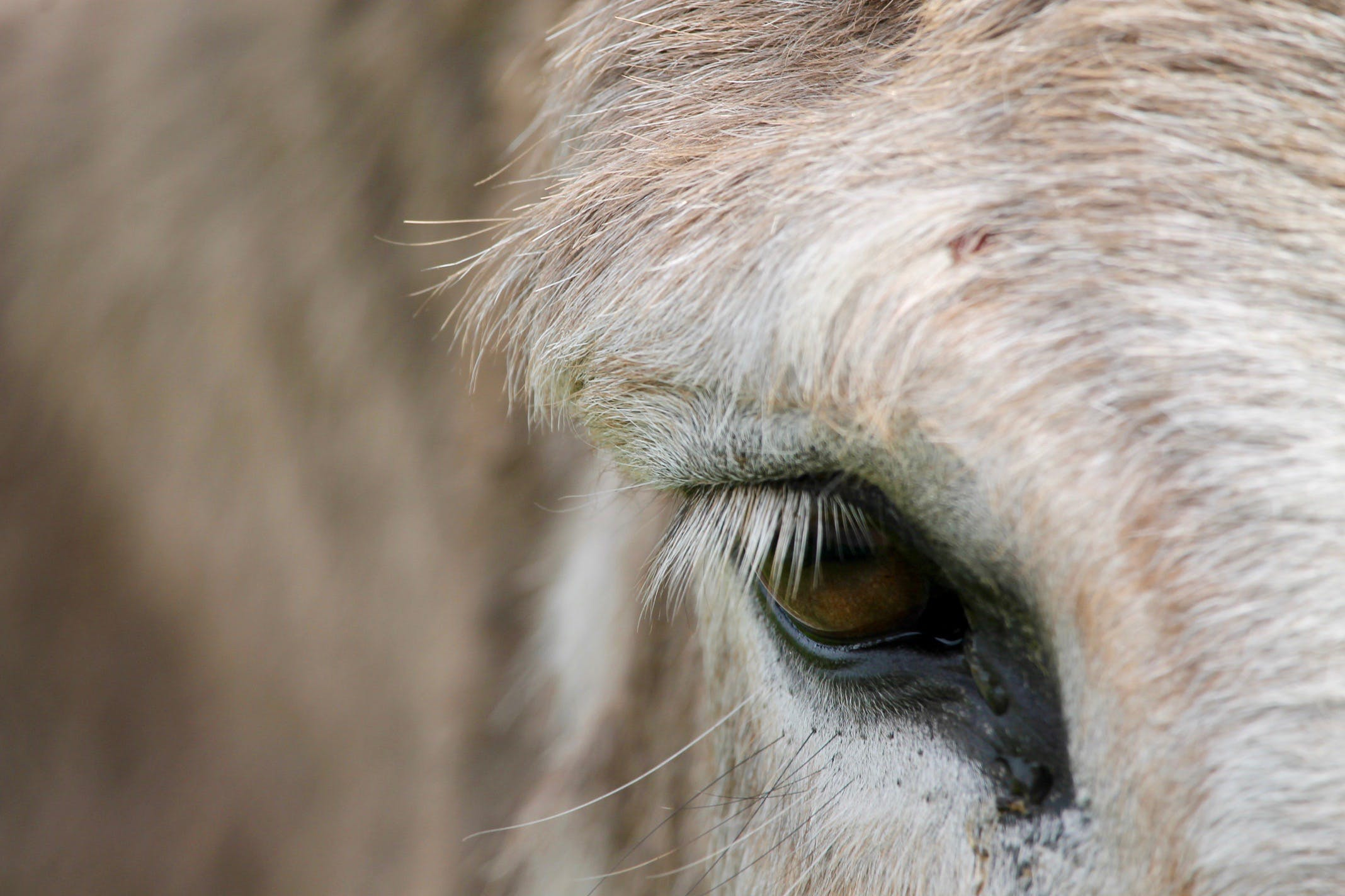 blur, close-up, donkey