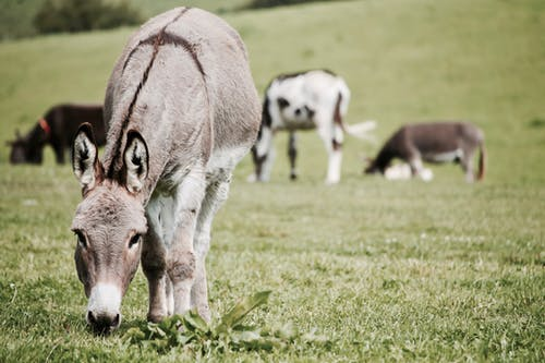 Donkeys on Grass Field