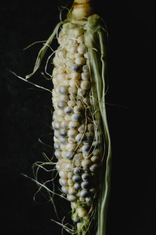 Yellow Corn in Black Background
