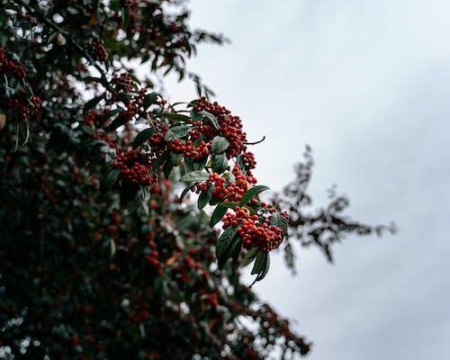 Immagine gratuita di albero, arbusto, autunno, cadere