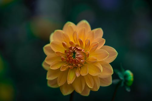Macro Shot Of A Yellow Flower