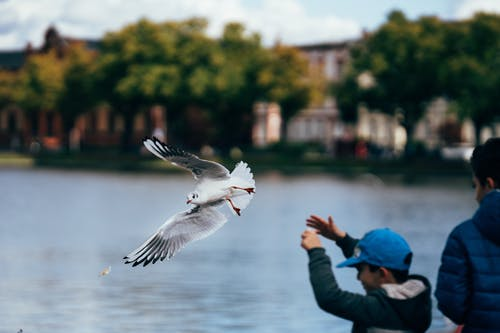 White Bird Flying Over A Body of Water