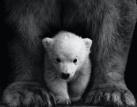 Free stock photo of black-and-white, animal, fur, wilderness