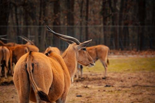 Graceful antelopes grazing in paddock