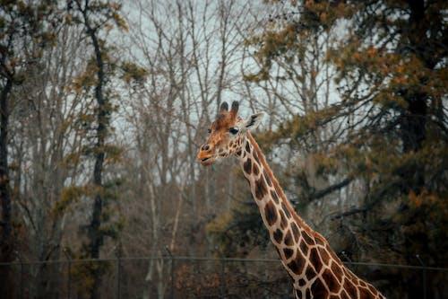 Giraffe standing in national park