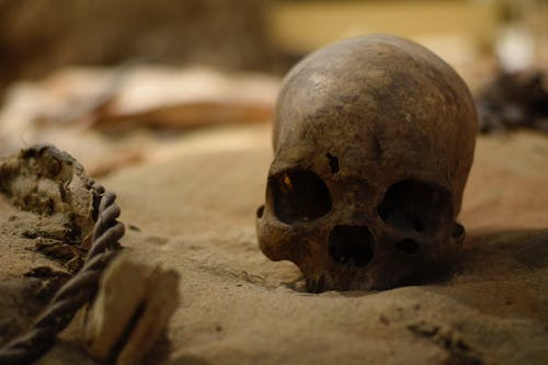 Close-Up Shot of a Skull on the Sand