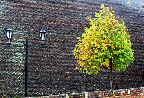 Foto profissional grátis de árvore, farol